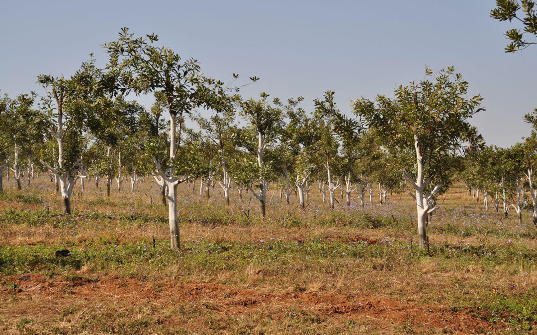 Replanted trees close the investment returns gap