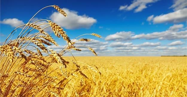 Grain SA's NAMPO Harvest Day – 14 – 17 May 2019