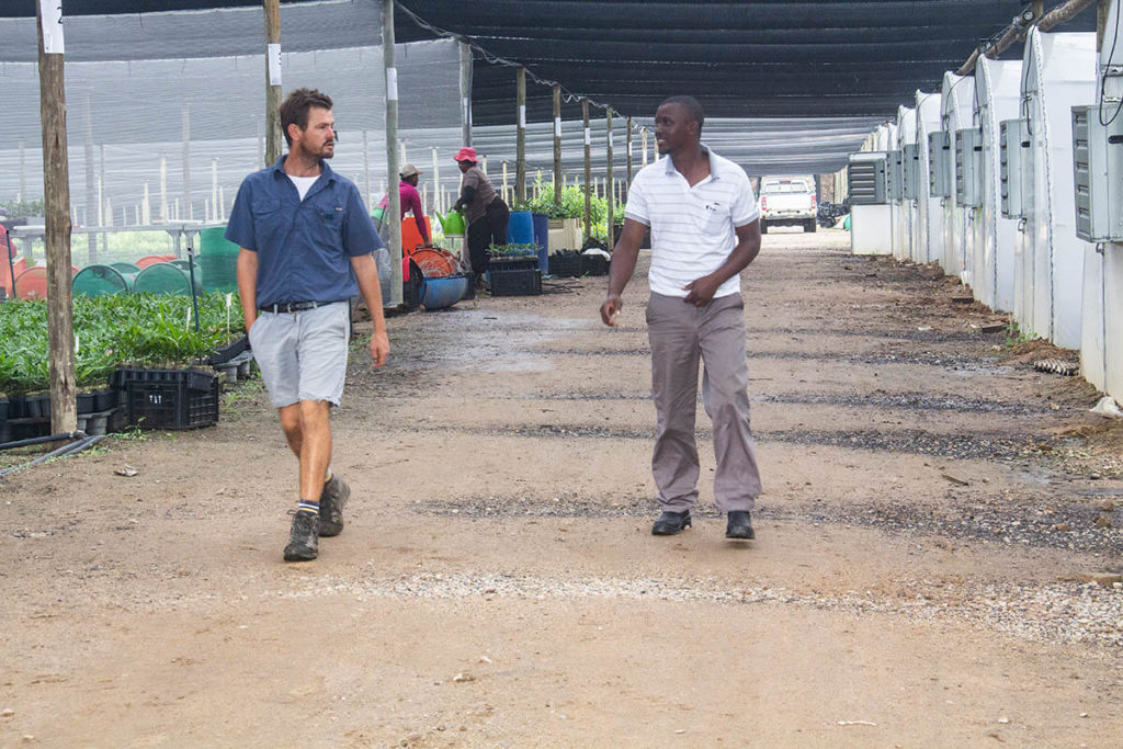 T&T Horticulture managing partner Colin Rand discusses operations at KwaZulu-Natal's largest macadamia nursery with its manager, Mhlengi Sibiya.
