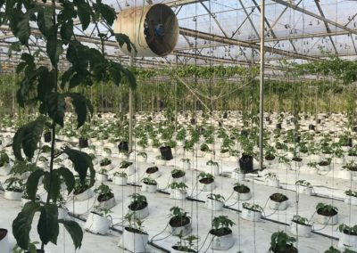 1001 – Macadamia Nut Nursery for sale – Zululand