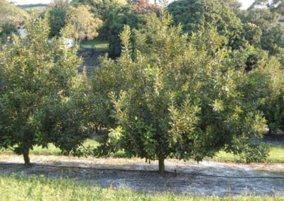 RL3012 – 200HA farm for sale – Margate