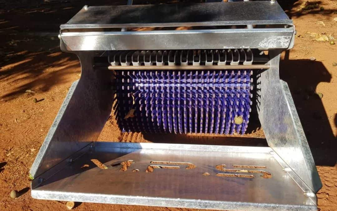 Collect nuts in no time with manual harvesters
