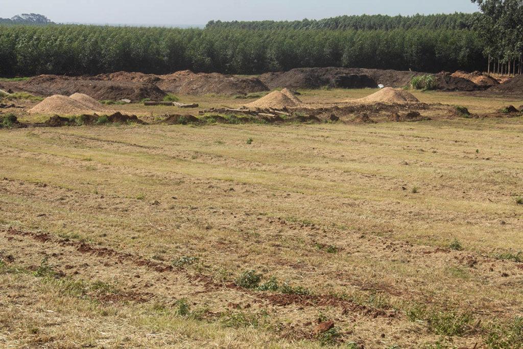 Golden Mile8-Macadamia-farming-south-africa