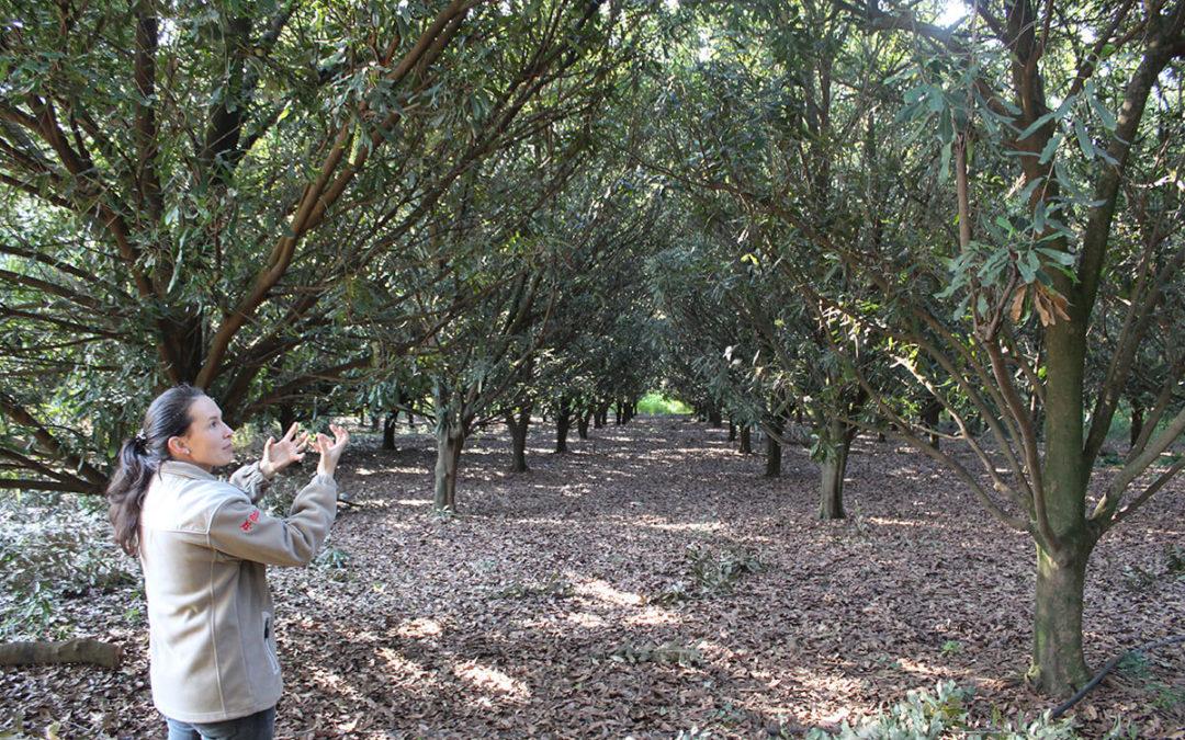 Elsje Joubert believes in a more holistic approach to pest control.