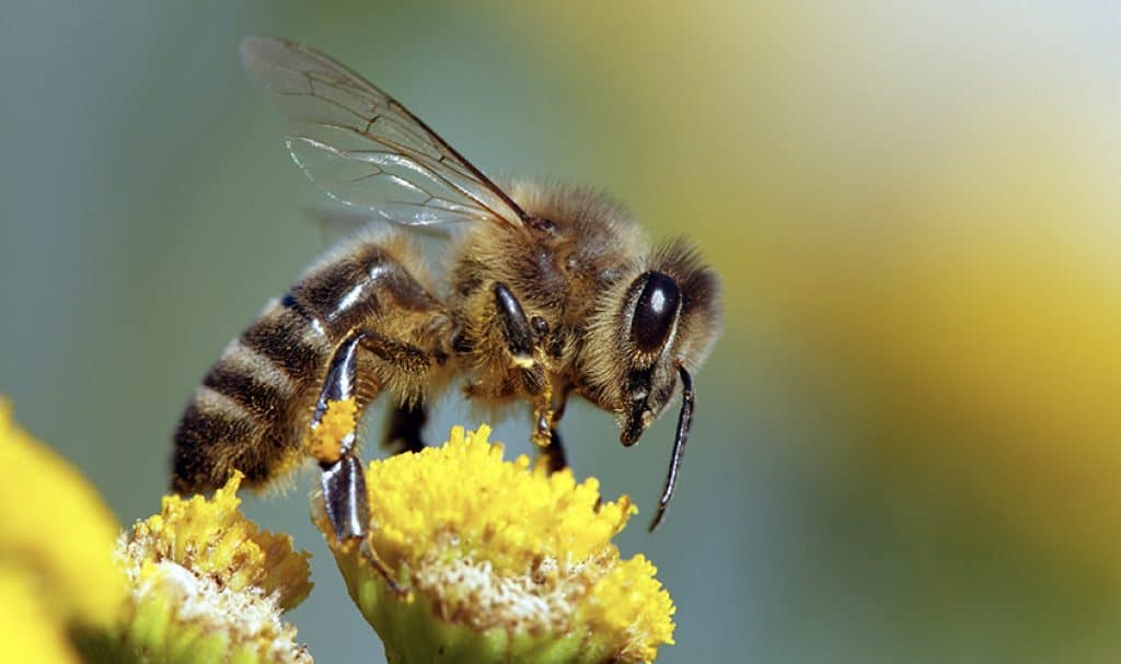 Look after your bees and they will look after your yield