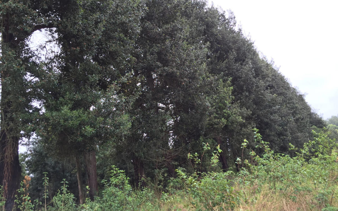 Planning and designing effective windbreaks